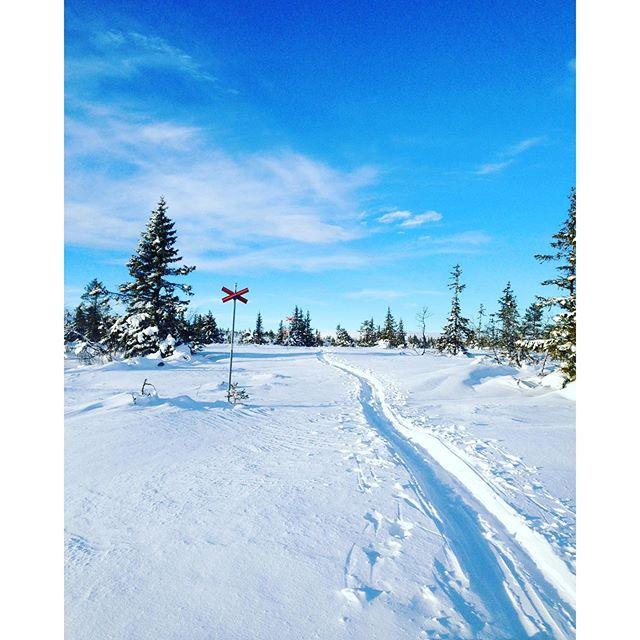 1/3 i feber, 1/3 som uppoffrar sig och 1/3 som njuter av förunderlig nåd! #fjäll #snö #nådförnyavärldar #palt
